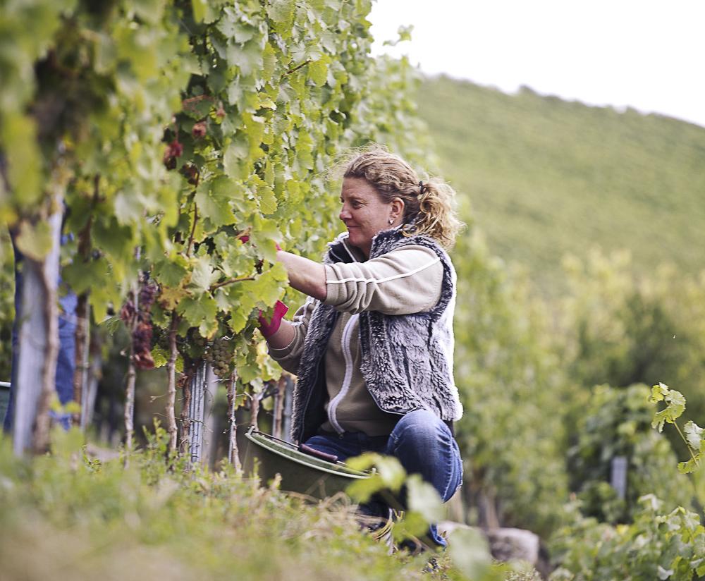 Bei der Weinlese